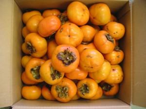 吉岡様 柿
