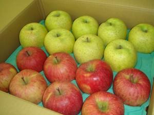 福島様より りんご