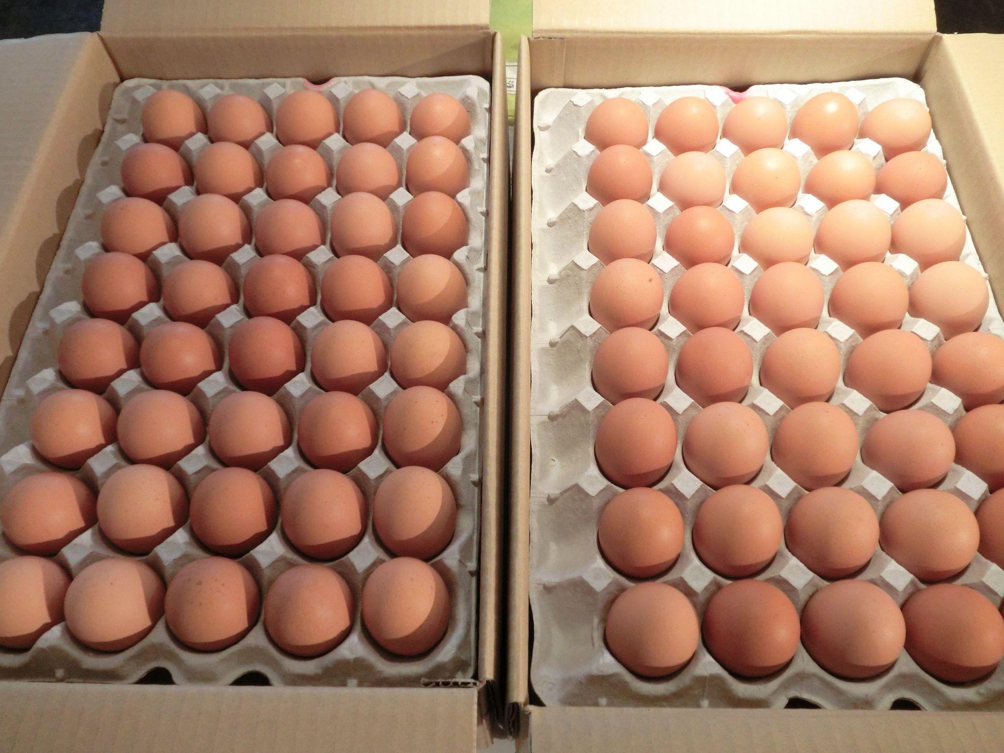 石原様より鶏卵を頂きました。