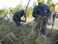 2011.10.27-29,31老人ホーム涼風園草刈り
